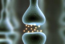 根症状型(こんしょうじょうがた)イメージ